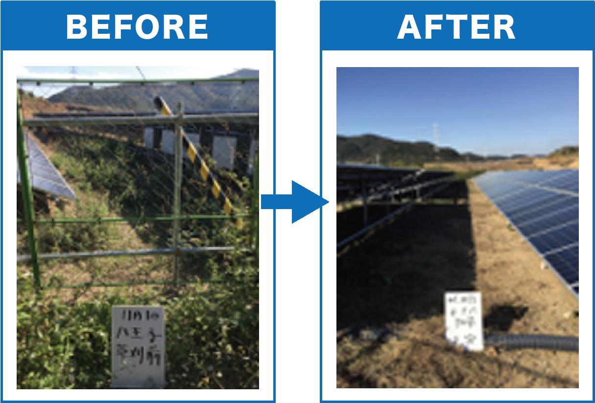 草刈り前と草刈り後の比較